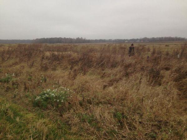 Охота на фазана в Подмосковье фото №543