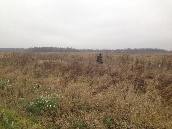 Охота на фазана в Подмосковье фото №544