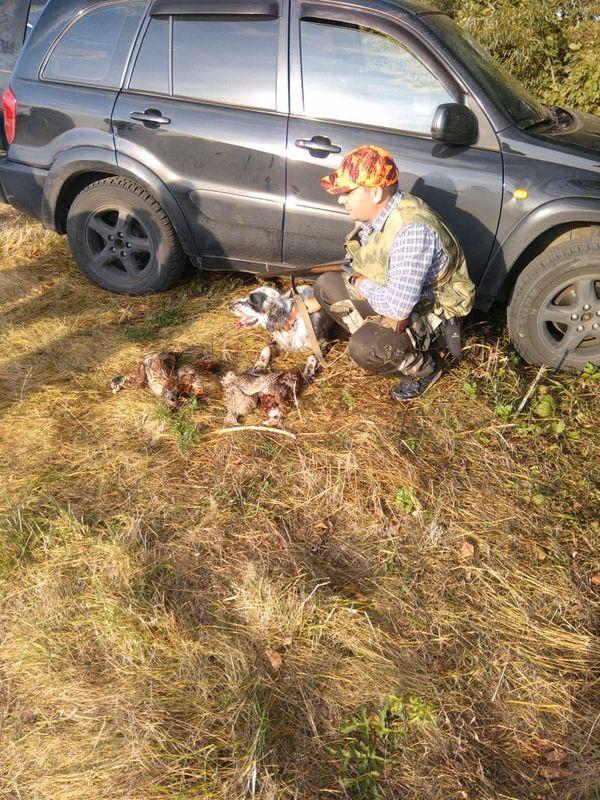 Охота на фазана в Подмосковье фото №553