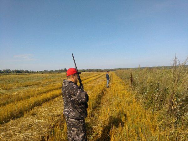 Охота на фазана в Подмосковье фото №562