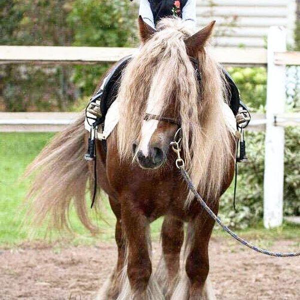 Прогулки на лошадях фото №10