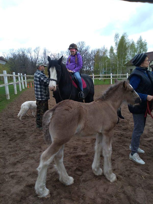 Прогулки на лошадях фото №34