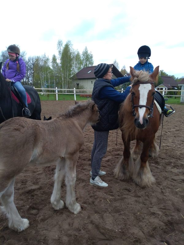 Прогулки на лошадях фото №35