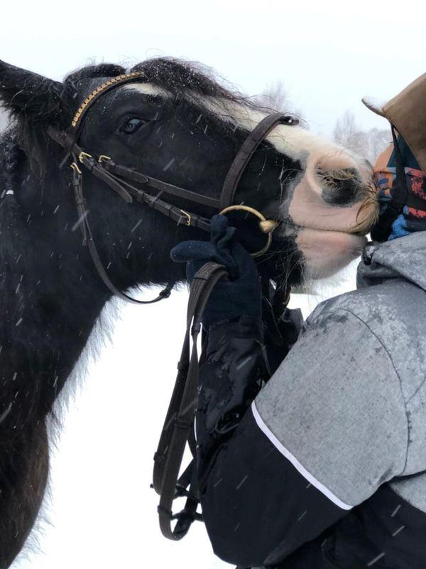 Прогулки на лошадях фото №41