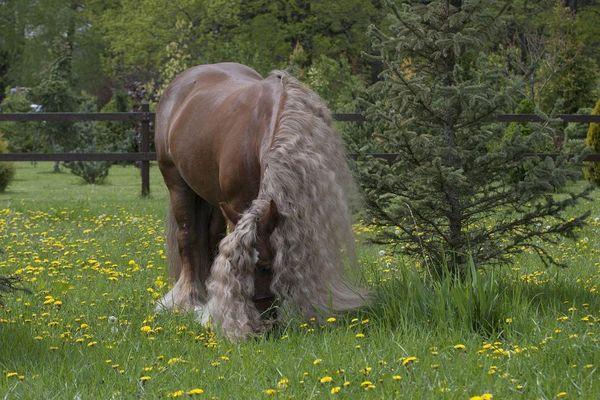 Прогулки на лошадях фото №51