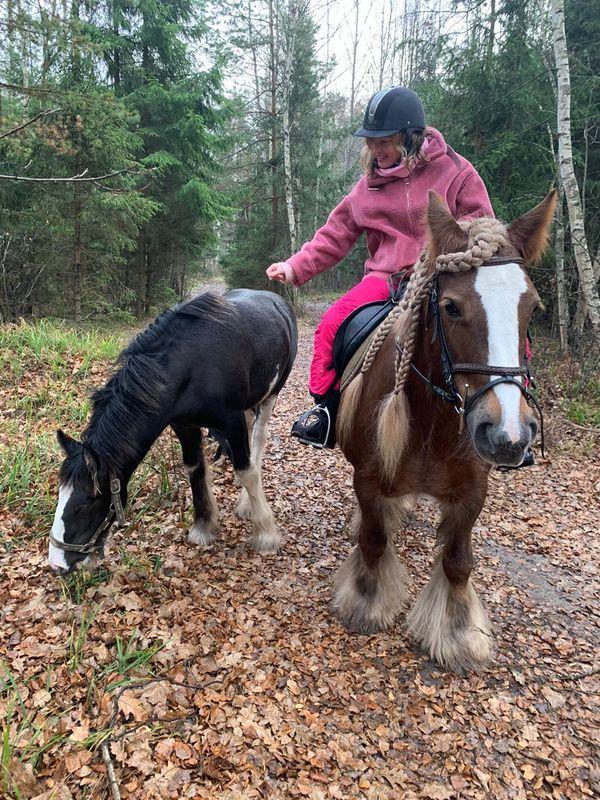 Прогулки на лошадях фото №8